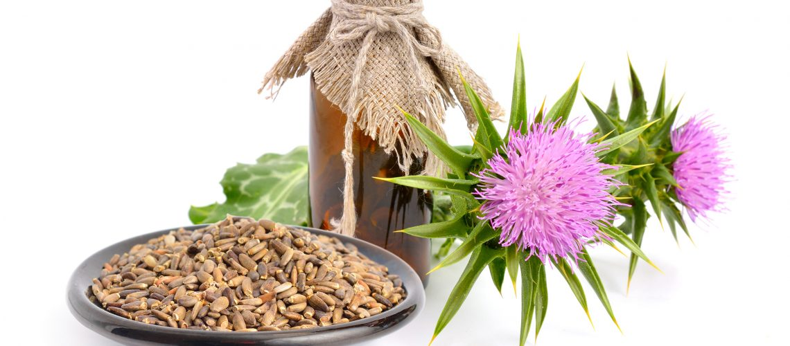Milk thistle oil with flowers and seeds. Isolated.